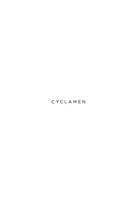Cyclamen 2
